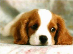 Köpek  Yüzünden Kavga: 1 Ölü, 2 Yaralı