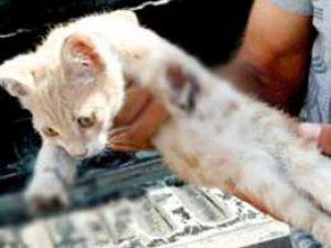 Urfa&#39da yavru kedinin ayaklarını kestiler