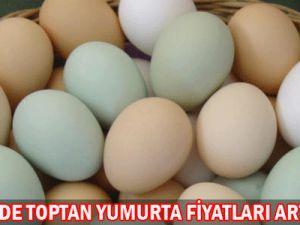 Kayseride Yumurta fiyatı