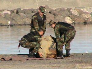 Balıkçılar mayın tuttu
