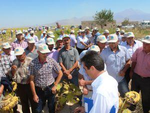 Kayseri Şeker Fabrikası Yağlık Ayçiçeği Bitkisini Çiftçisiyle Buluşturdu