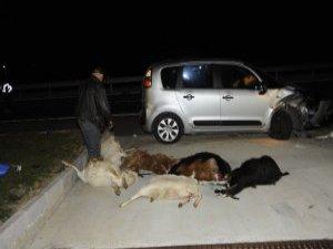 Keçi Sürüsüne Çarptı, 13 Keçi Telef Oldu