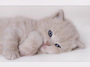 Uyanık kedi aç bıraktı