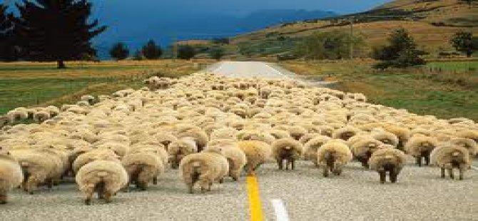 Askeri ücretli iş olsun çoban maaşım yüksek diye kız vermiyorlar
