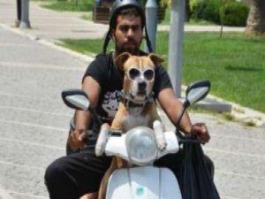 Köpeğiyle Türkiye turuna çıktı - VİDEO