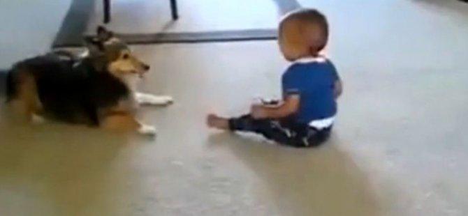 Köpekle Oynayan Bebek Gülme Krizine Girdi