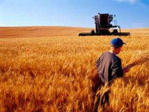 Türkiye'de tarım üretimi düşecek