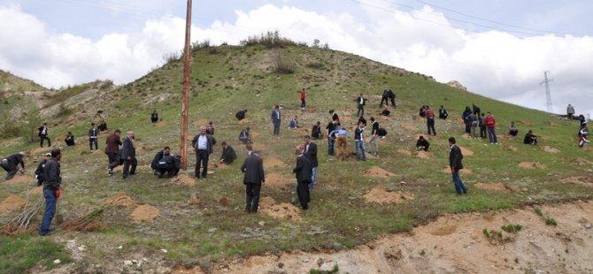 KAYSERİ'DE KADIN MUHTAR, KÖYÜNE AĞAÇ DİKTİRDİ
