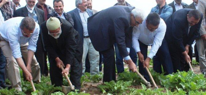 Şeker Fabrikası Yemliha'da çapa etkinliği düzenlendi