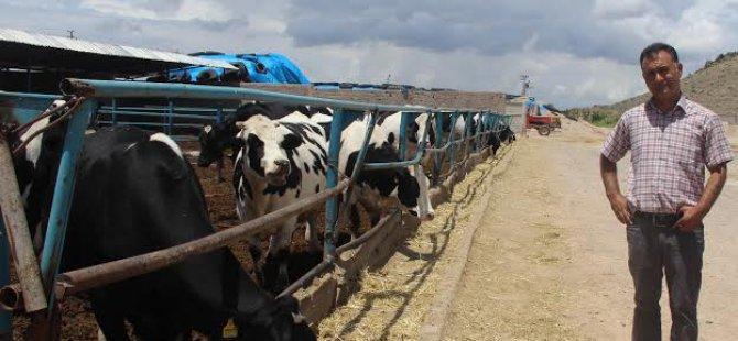 Kayseri İli Damızlık Sığır Yetiştiricileri Birlik Başkanından açıklama:
