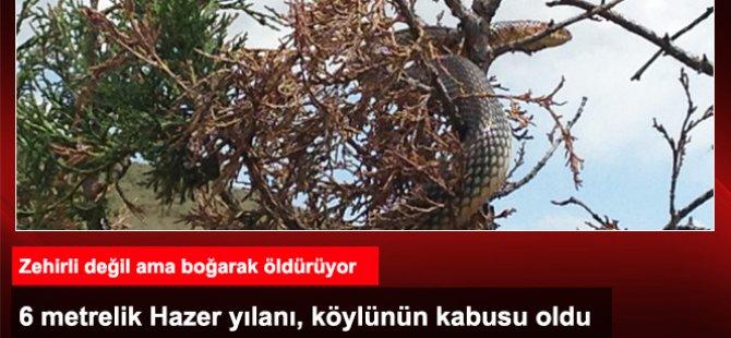 Köylünün korktuğu 6 metrelik yılan hala bulunamadı