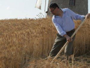 Altın Köy'de ekin biçme seramonisi