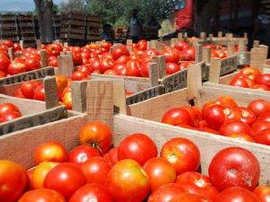 Yemeklerin vazgeçilmezi sofraların baş tacı olan domates