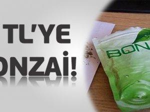 """Kayseri """"Öğrenciler 5 TL'ye Bonzai Alabiliyor"""""""