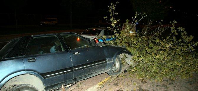 Kayseri'de otomobilin çarptığı ağaç yerinden söküldü