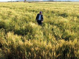 Çiftciye Müjde Gübre ve Mazot Desteği Artacak Çiftçi Coşacak