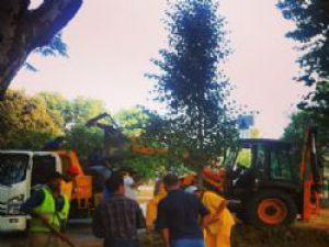 Gezi Parkı'na Ağaçlar Dikiliyor!..