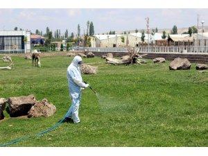 Kayseri'de son zamanlarda can alan kene