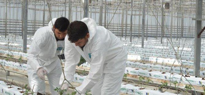 Kayseri Şeker'de Topraksız tarım seracılığı