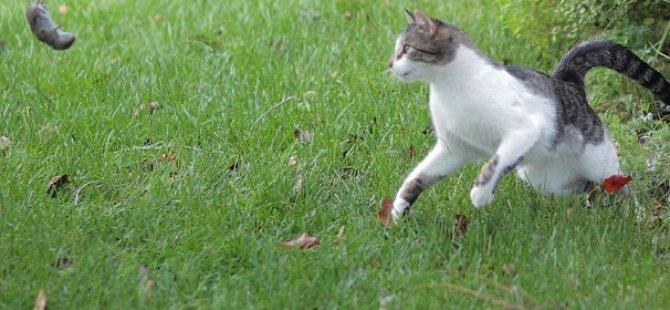 Kedi Avını son anda fark etti.. ve...video