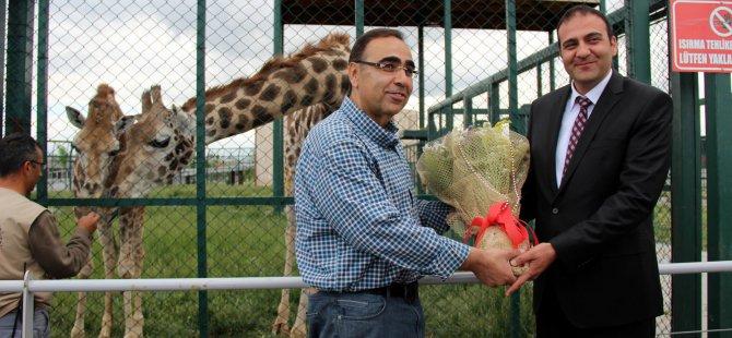 Zürafa Şakir için Kayseri'ye gelerek Selvi'yi istedi