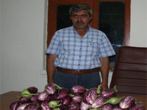 Yemliha Tarımsal Kooperatifinde Yamula Patlıcan Satışları Başladı