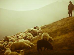 Özel Çoban Okulu Geliyor