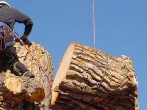 Baltayla Odun Parçalarken Gözüne Saplandı