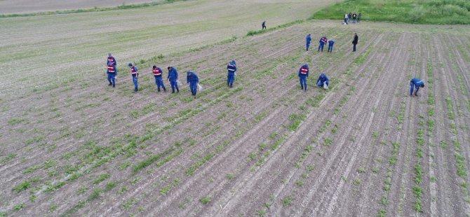 Bünyan Ekinciler köyünde 2 bin 418 kök kenevir bitkisi ele geçirildi
