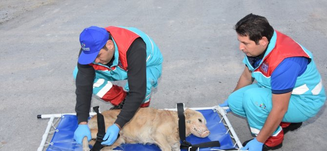 Kocasinan'ın Küçük Dostlar Ambulansı bin 252 can kurtardı