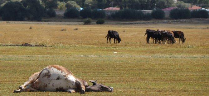 Kayseri'de hayvan ölümleri sonrasında iki mahalle karantinaya alındı