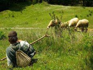 Kayseri'de PKK'yı övücü paylaşım yapan çobana hapis cezası