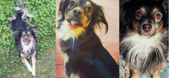 5 gün önce kaybolan köpeğinin izini sürüyor