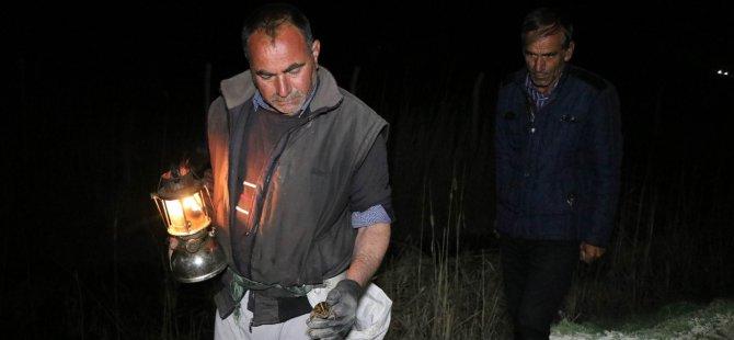 Yahyalı'da kurbağa topluyor Kilosunu 45 TL'den satıyor