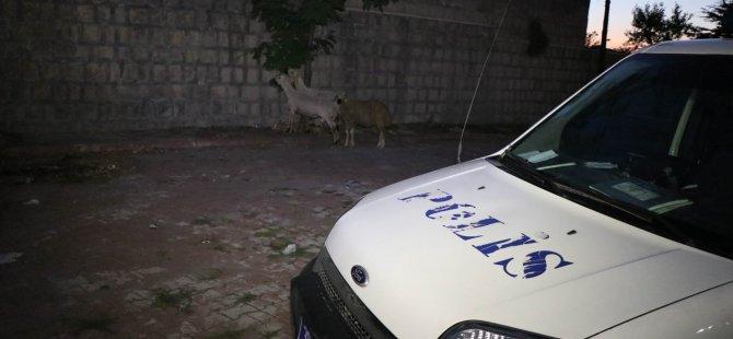 Sürüden kaçan koyunları polis ekipleri sahibine teslim etti