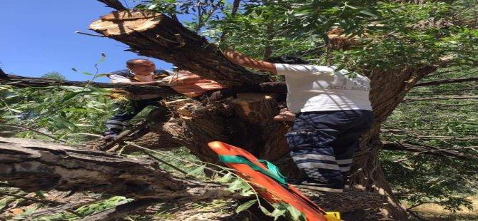 Ağacın dalları arasına sıkışan vatandaşı itfaiye ekipleri kurtardı