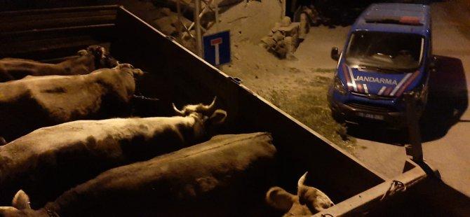 Kocasinan Molu'da hayvan hırsızlarını böyle yakaladı