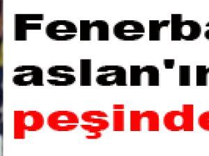 Fenerbahçe Aslan'ın Peşinde
