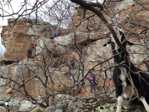 Develi kulpak'ta Uçurumda mahsur kalan 15 keçi kurtarıldı