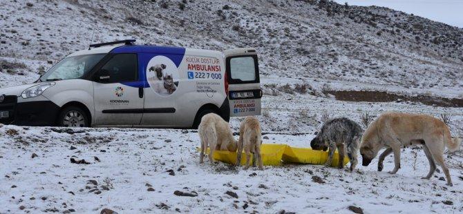 Kocasinan Belediyesi hayvanların ihtiyacı için vardiyalı çalışıyor