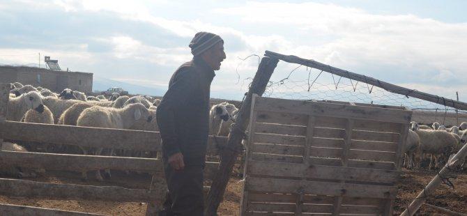 Kışın koyunlarımızı yonca ve yem ile beslemeye çalışıyoruz