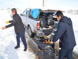 Bünyan Belediyesi risk altında kalan yaban ve sokak hayvanlarını unutmadı