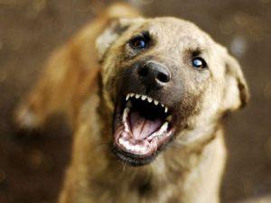 Paşa'nın Köpeği Er'i Parçaladı