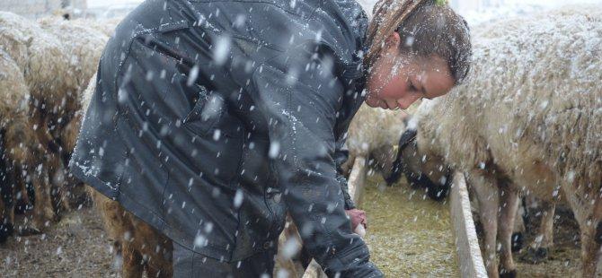 11 yaşındaki kardelen çobanlık yapan babasına yardım ediyor