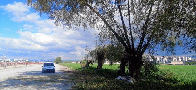 Oymaağaç'ta Budadığı ağaçtan düşen şahıs yaralandı