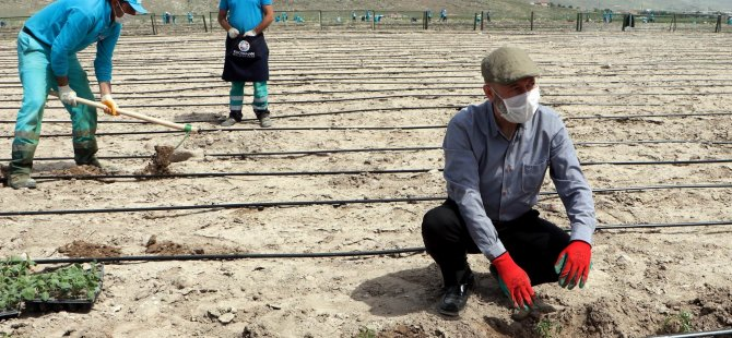 Başkan Çolakbayrakdar Hasan Arpa'ya domates fidelerini dikti