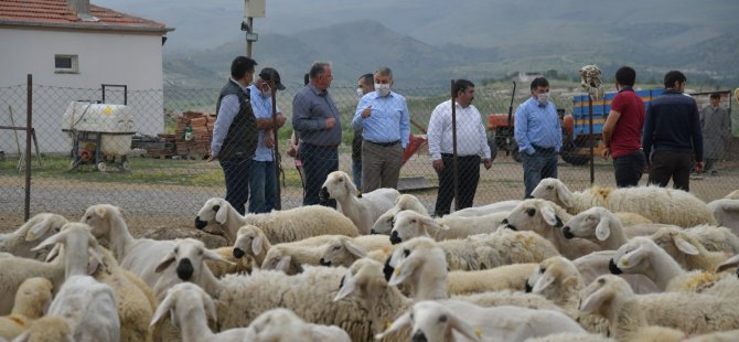 İnlerde 4 koyunla başladı,800 küçükbaş hayvana ulaştı