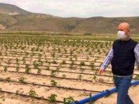 Kocasinan'da 70 bin sebze fidesi büyüyor