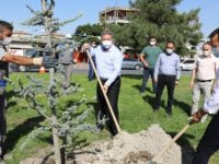"""Palancıoğlu""""fidan değil, ağaç dikiyoruz"""""""