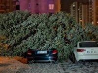 Kayseri'de şiddetli rüzgar ağaçları söktü